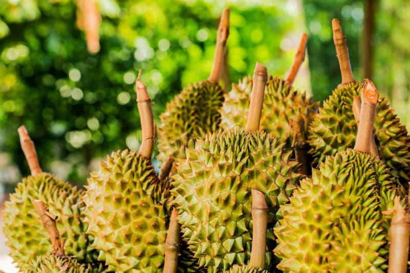 Fruta fresca del durian del jard?n del durian en venta en la fruta tropical de Tailandia del mercado local fotos de archivo