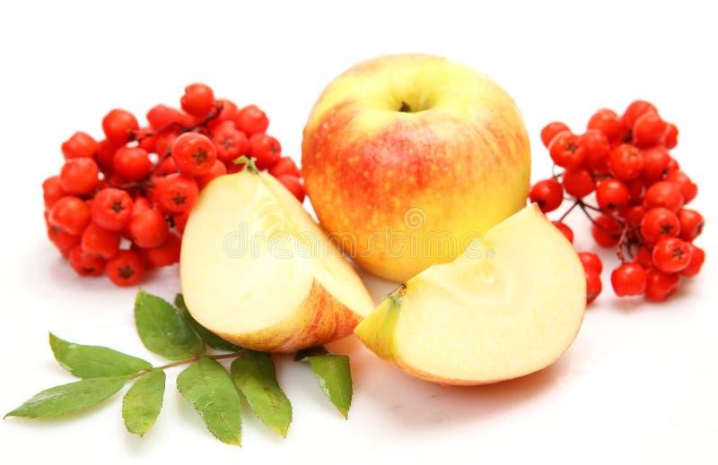 Fruta fresca e bagas imagens de stock