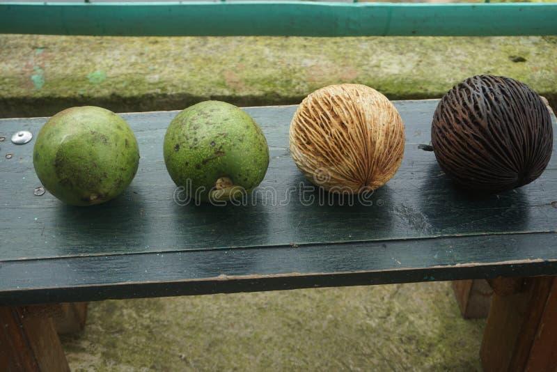 fruta fresca y fruta de guayaba stock de ilustración