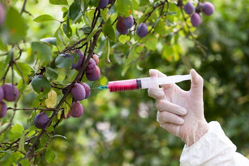 Fruta genético modificada imagen de archivo
