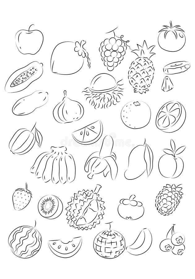 Fruta gráfica, vector ilustración del vector