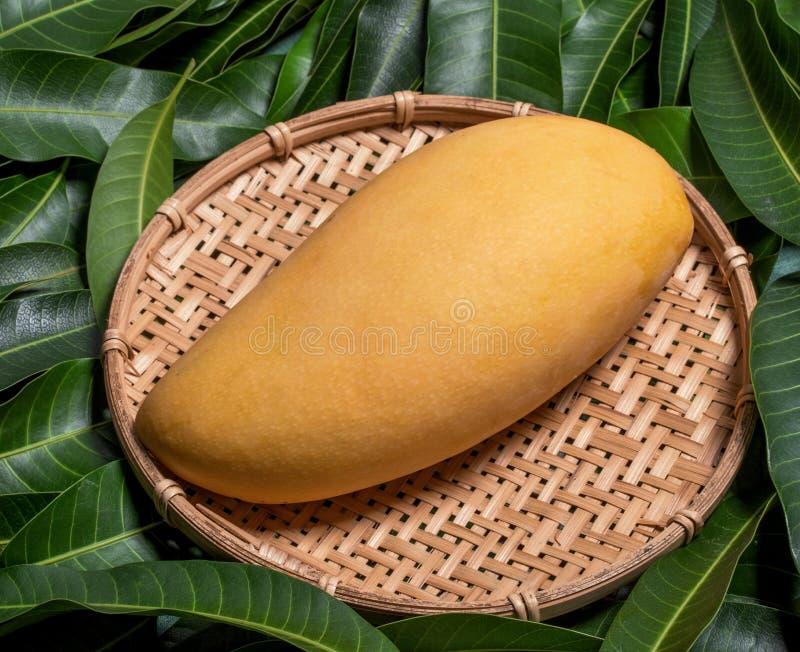 Fruta hermosa jugosa fresca del mango en el tamiz de bambú sobre fondo verde de la hoja Concepto tropical de la cosecha del veran foto de archivo libre de regalías