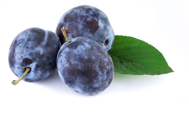 Fruta orgánica de los ciruelos con la hoja sobre blanco foto de archivo libre de regalías