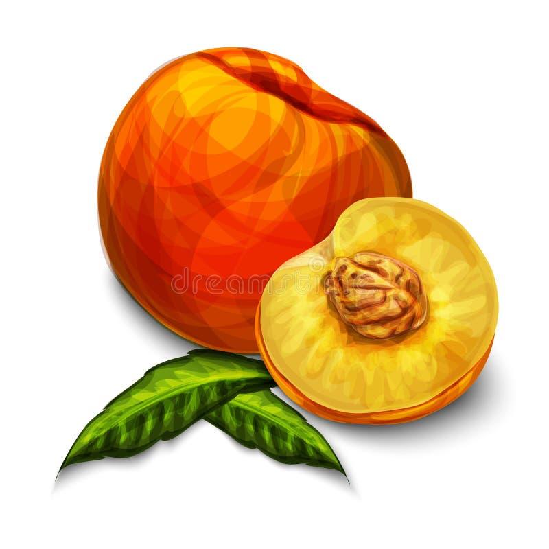 Fruta orgánica natural anaranjada del melocotón ilustración del vector