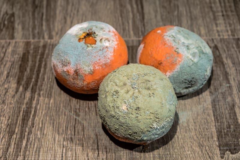 Fruta putrefacta y fresca de la mandarina con el molde fotografía de archivo libre de regalías