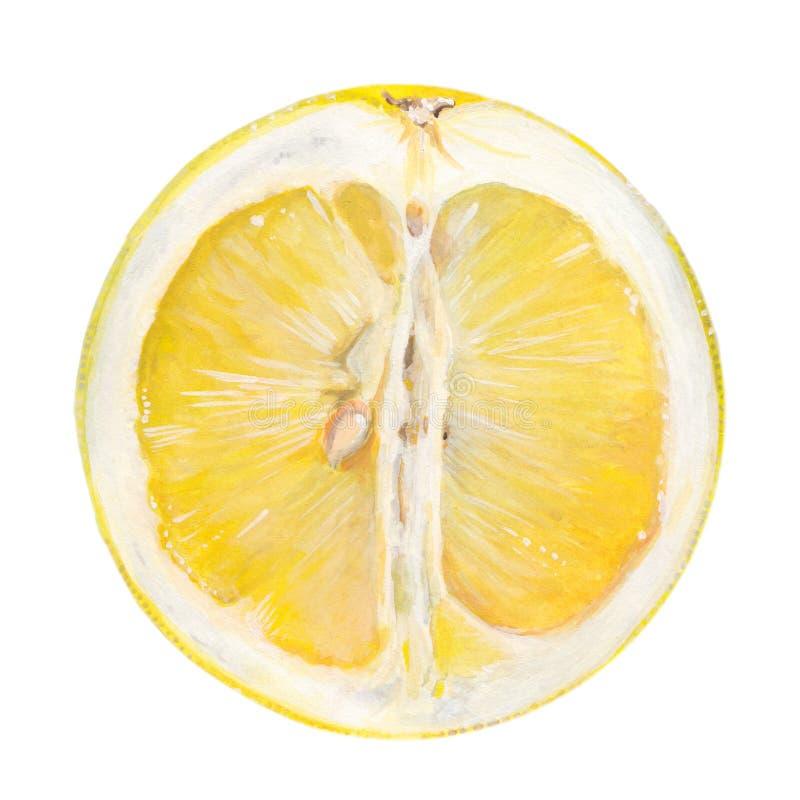 Fruta suculenta da uva ilustração do vetor