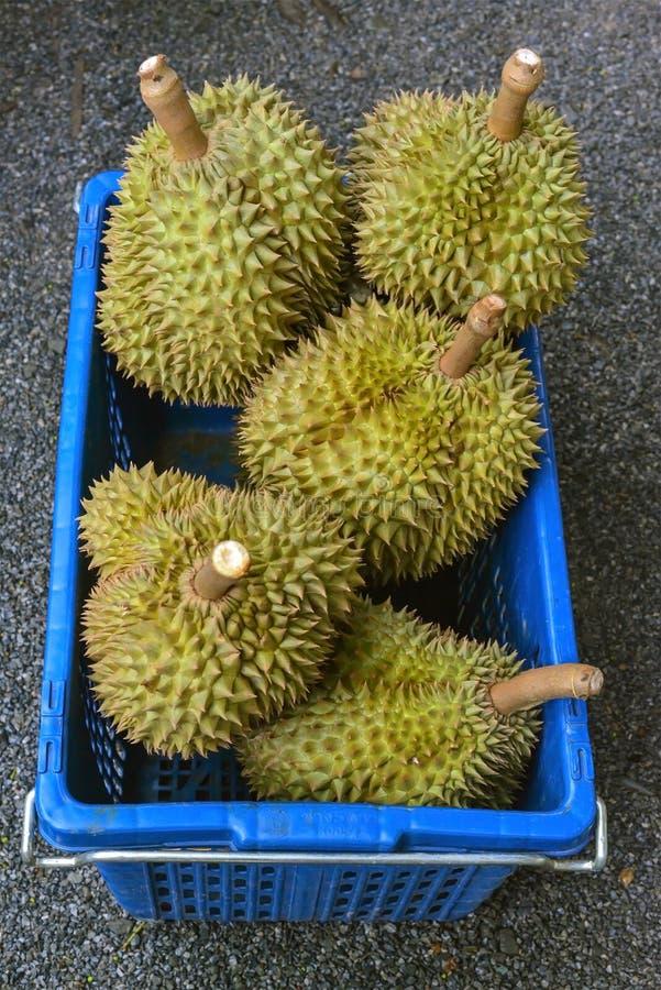 Fruta tailandesa del durian fresco en cubo plástico foto de archivo libre de regalías