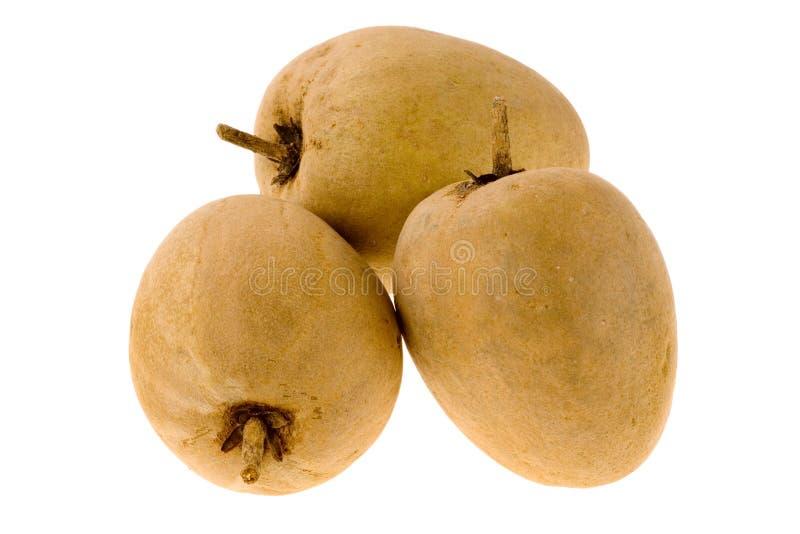 Fruta tropical - Chiku imagem de stock