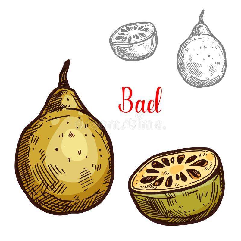 Fruta tropical del bosquejo del vector de Bael stock de ilustración