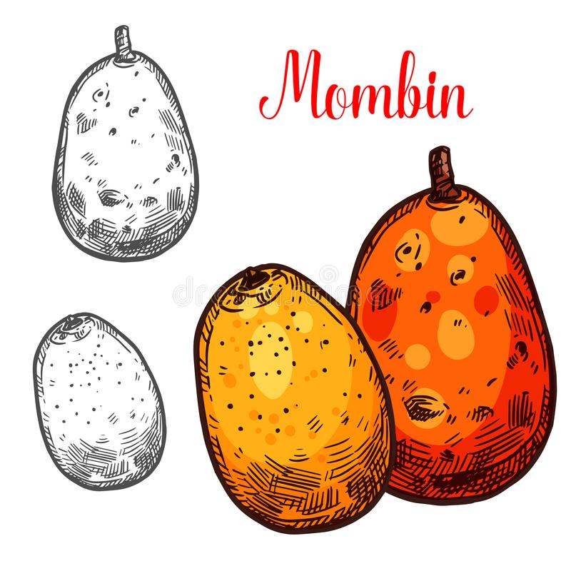 Fruta tropical del bosquejo del vector de Mombin ilustración del vector