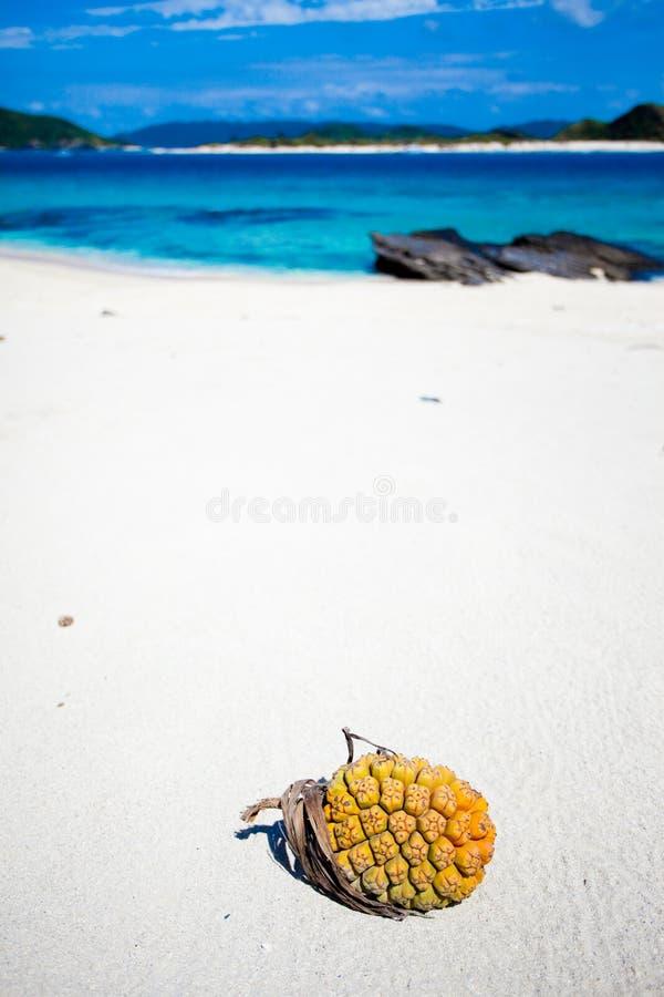 Fruta tropical en la playa blanca abandonada imagen de archivo libre de regalías