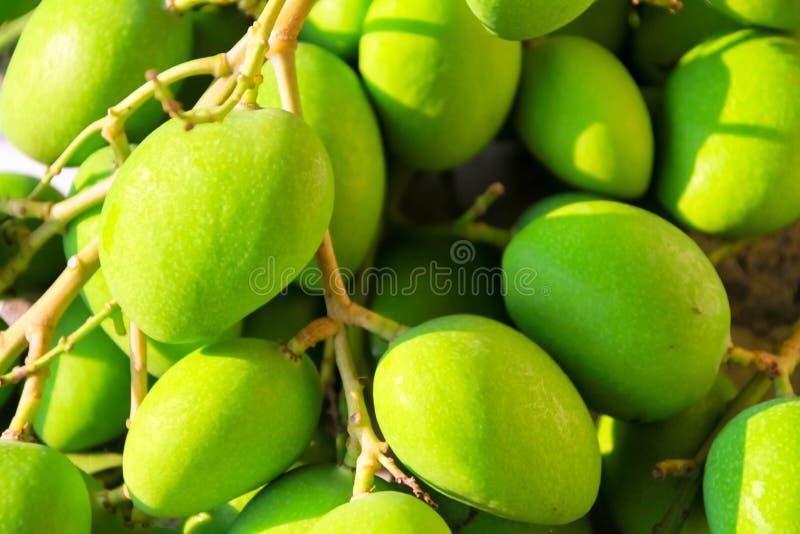 Fruta verde da manga fotografia de stock