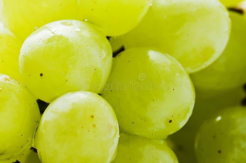 Fruta verde de las uvas fotografía de archivo libre de regalías