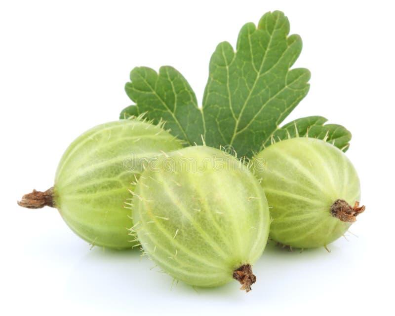 Fruta verde do gooseberry com folha fotos de stock
