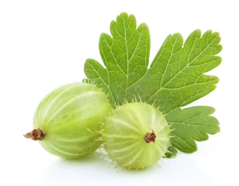 Fruta verde do gooseberry com a folha no branco imagens de stock