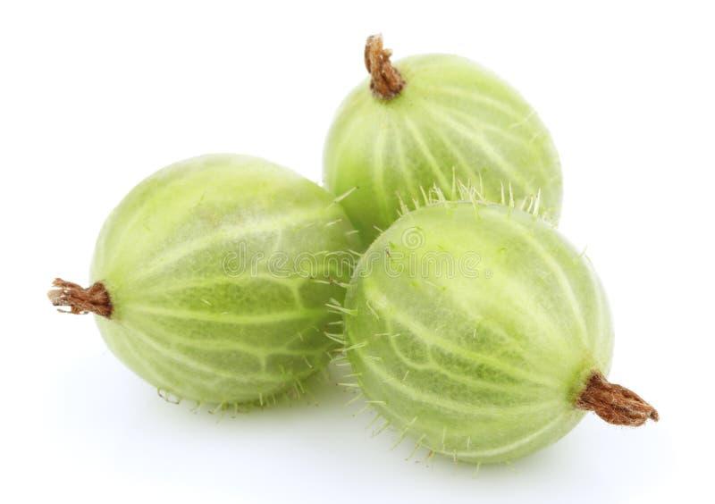Fruta verde do gooseberry no branco imagem de stock
