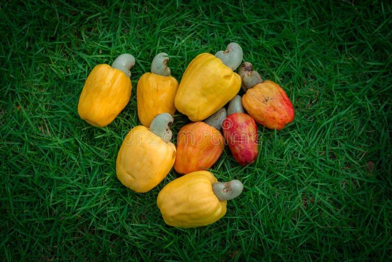Fruta y nuez fotografía de archivo libre de regalías