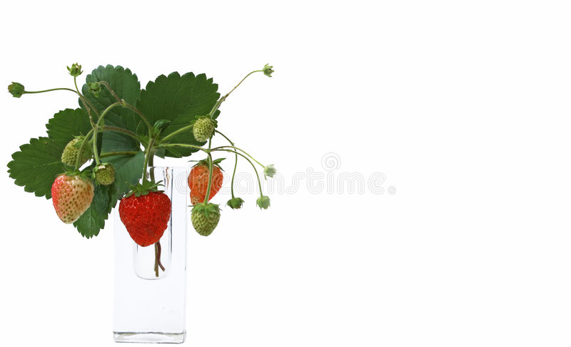 Frutas aisladas - fresas imagen de archivo libre de regalías