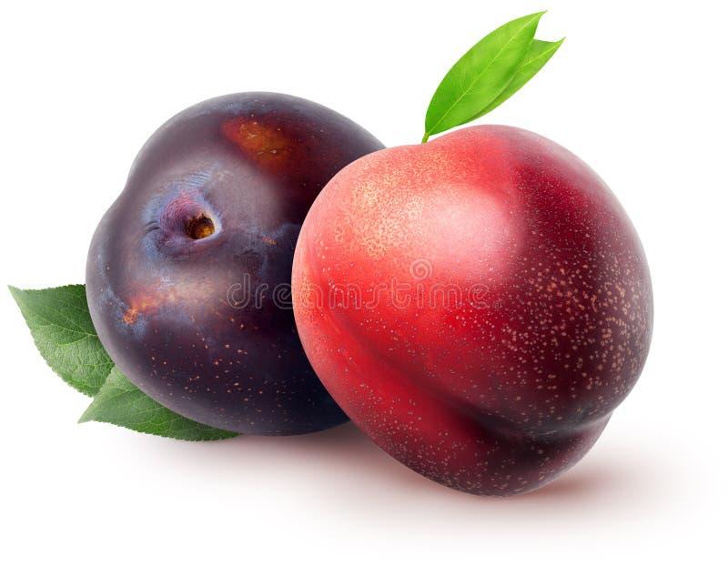 Frutas aisladas Fruta y ciruelo enteros de la nectarina con las hojas aisladas en el fondo blanco con la trayectoria de recortes imágenes de archivo libres de regalías