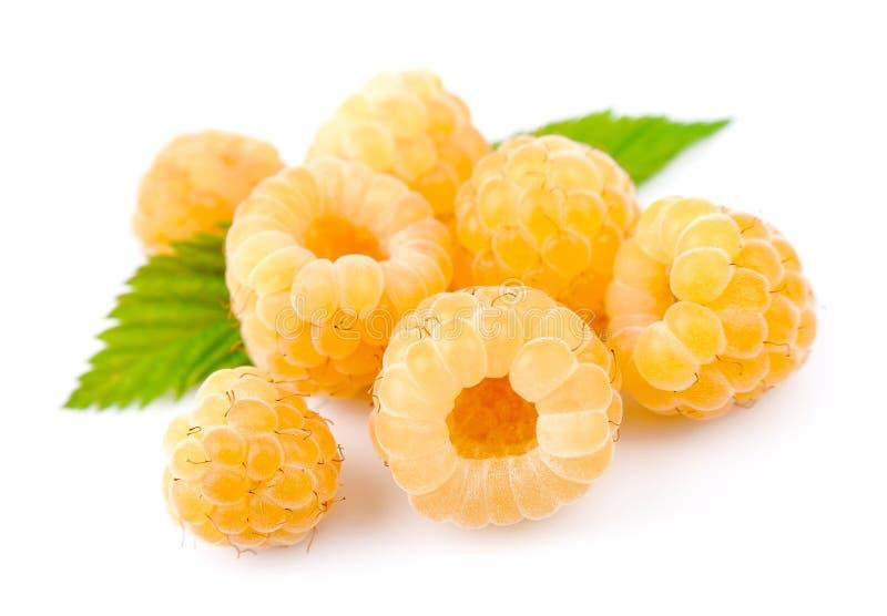 Frutas blancas de la frambuesa fotografía de archivo libre de regalías