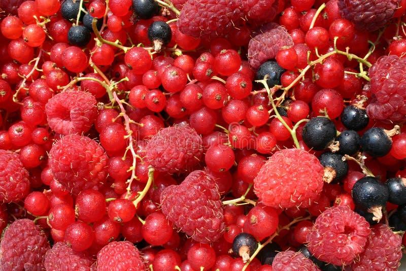Frutas clasificadas imagenes de archivo