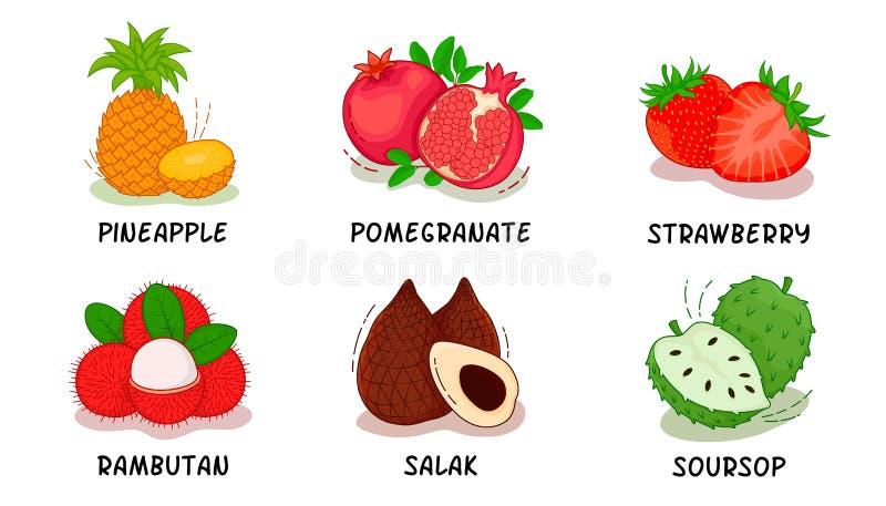 Frutas, frutas colección, piña, granada, fresa, Rambutan, Salak, guanábana ilustración del vector