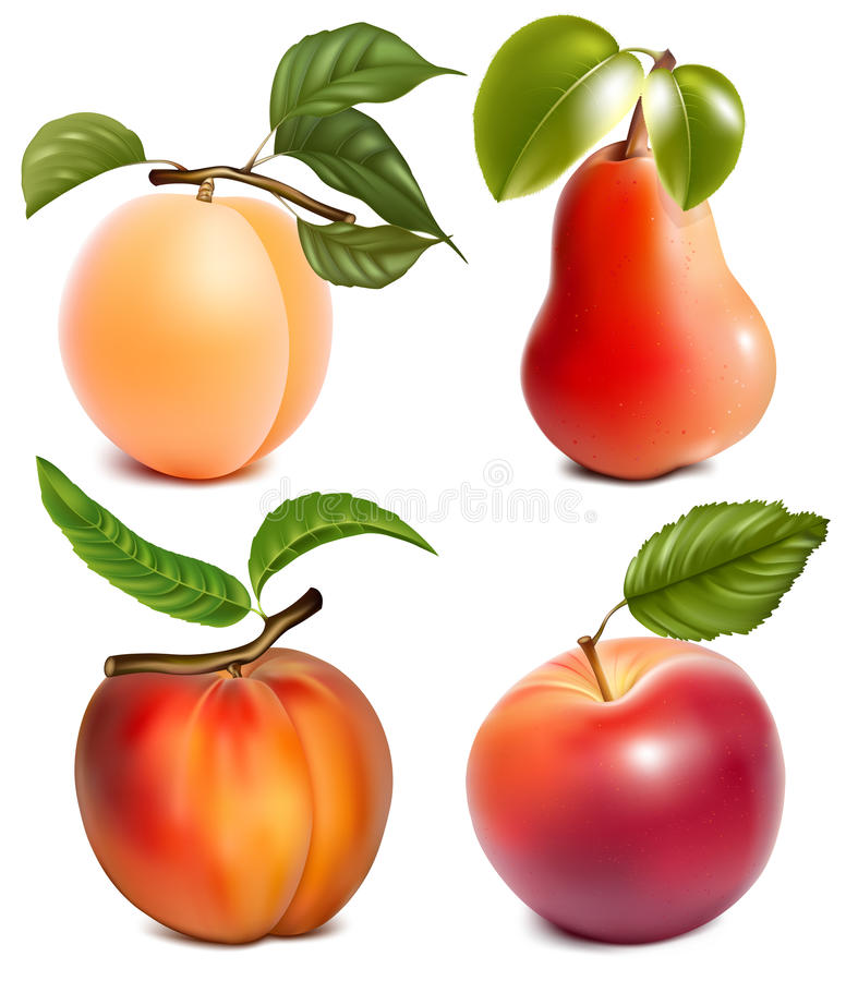 Frutas com folhas fotografia de stock