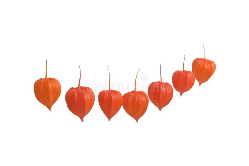 Frutas da cereja de inverno imagem de stock royalty free