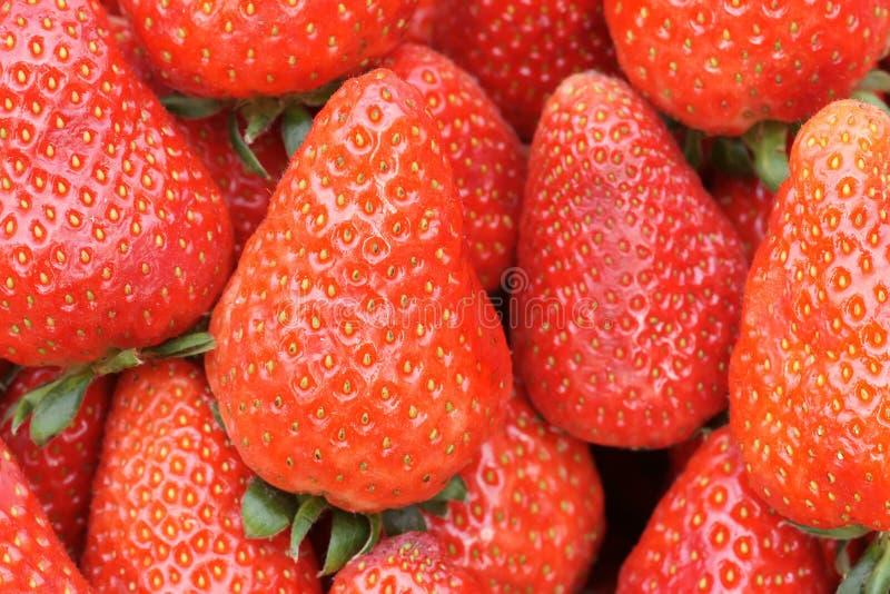 Frutas da morango fotografia de stock royalty free