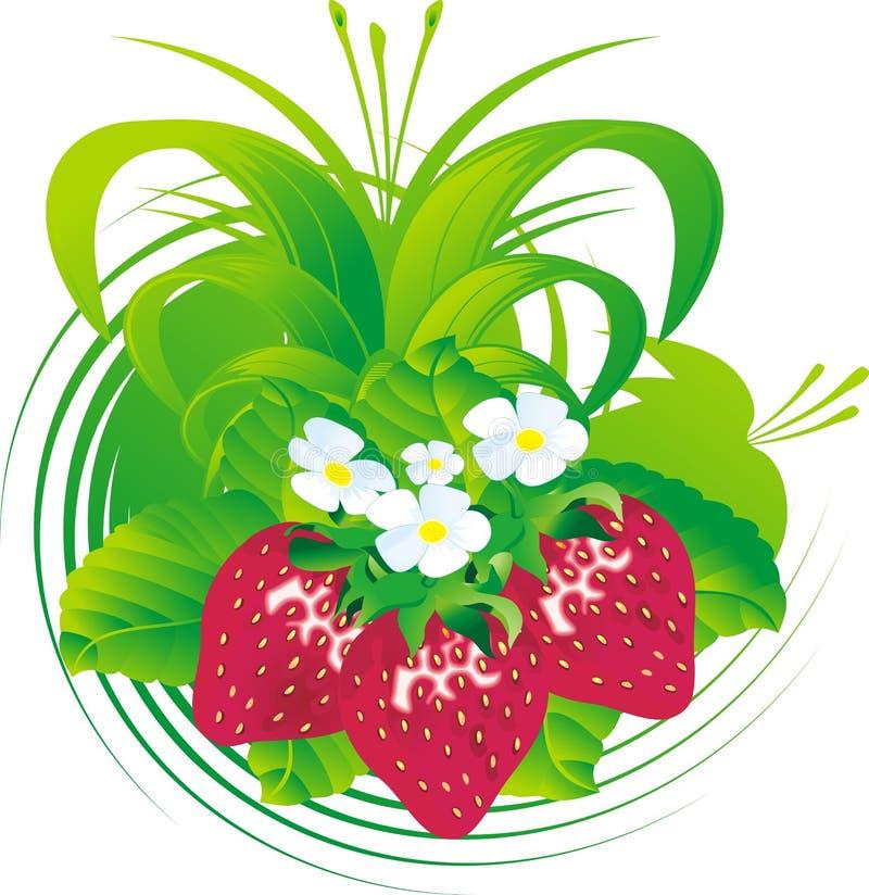 Frutas da morango ilustração royalty free