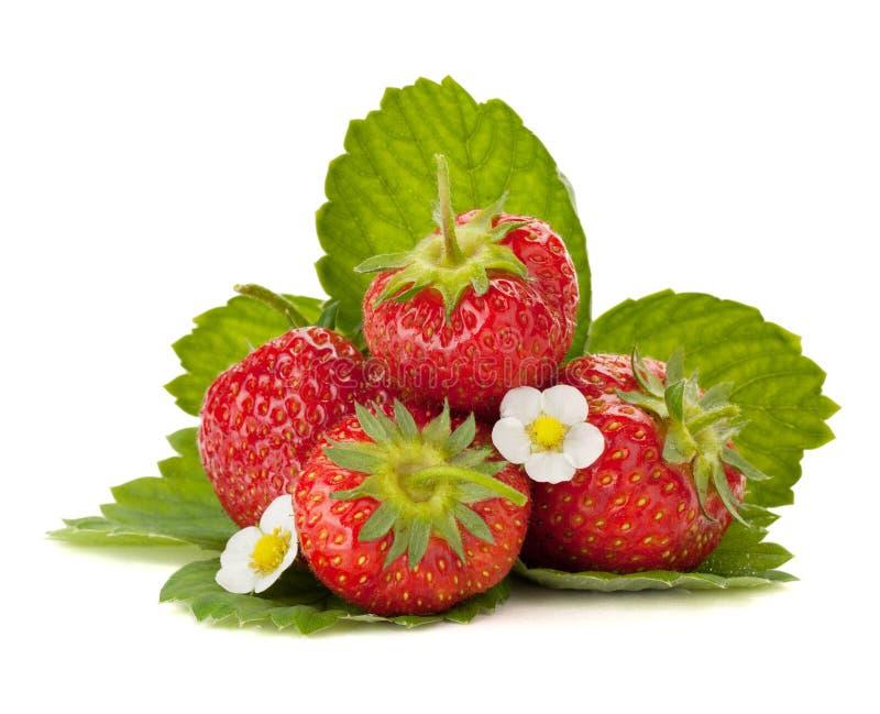 Frutas da morango com flores e folhas do verde imagens de stock royalty free