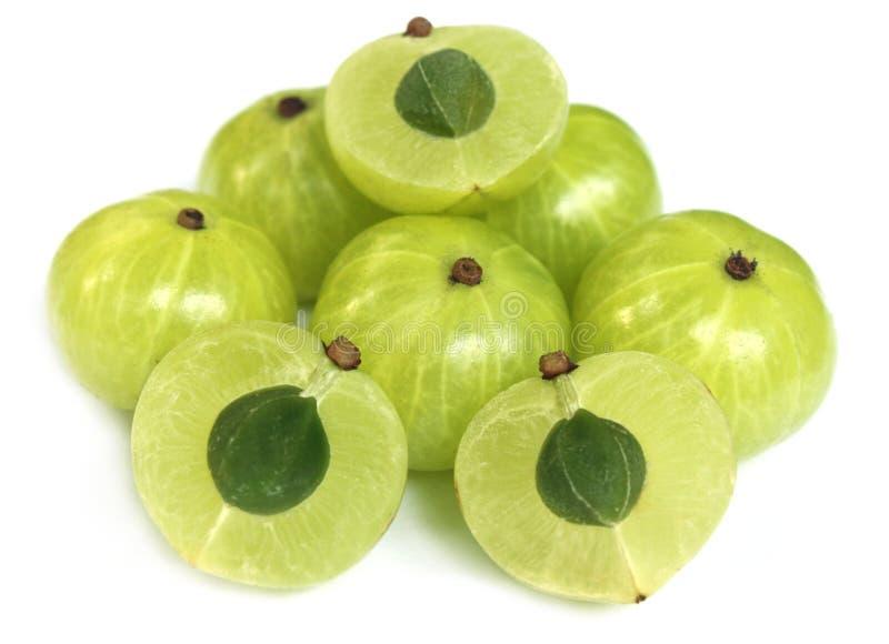 Frutas de Amla con el foco selectivo fotografía de archivo libre de regalías