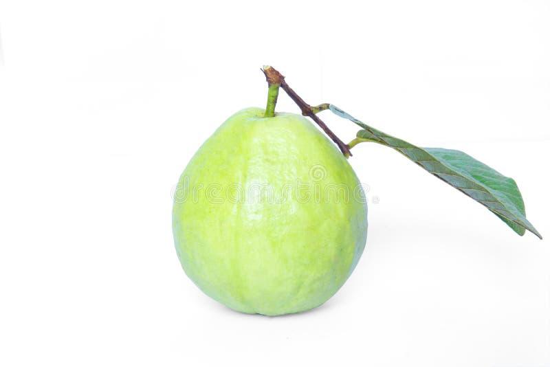 Frutas de guayaba en el fondo blanco fotos de archivo