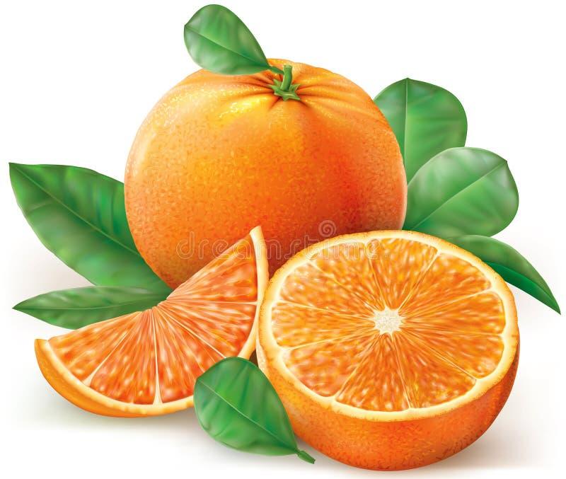 Frutas de las naranjas del grupo ilustración del vector