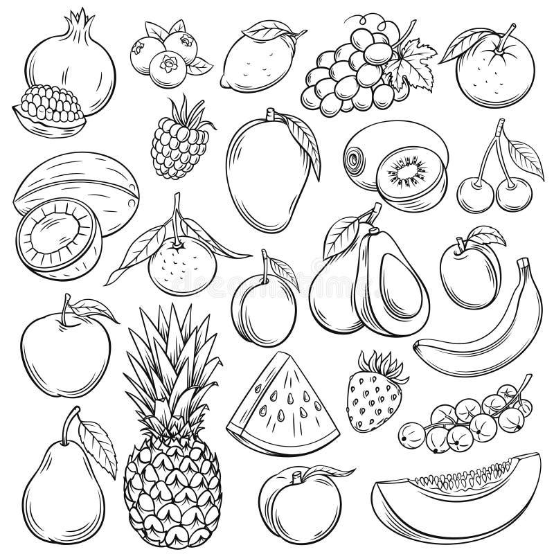 Frutas del bosquejo del vector libre illustration