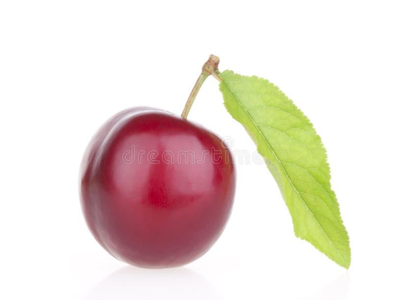 Frutas del ciruelo con la hoja imagen de archivo libre de regalías