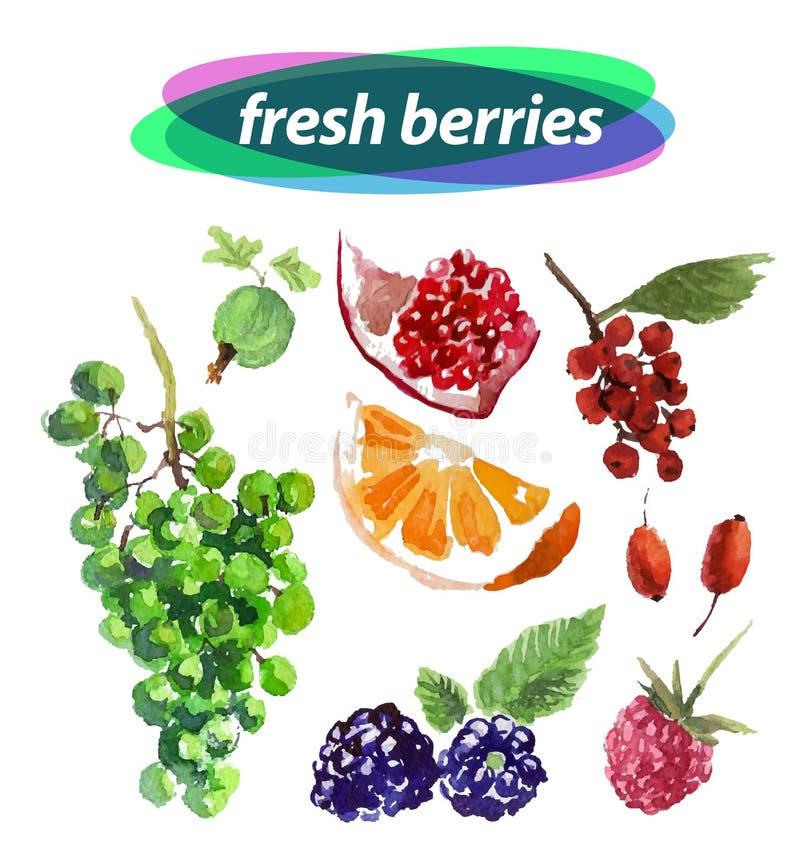 Frutas dibujadas mano linda del ejemplo stock de ilustración