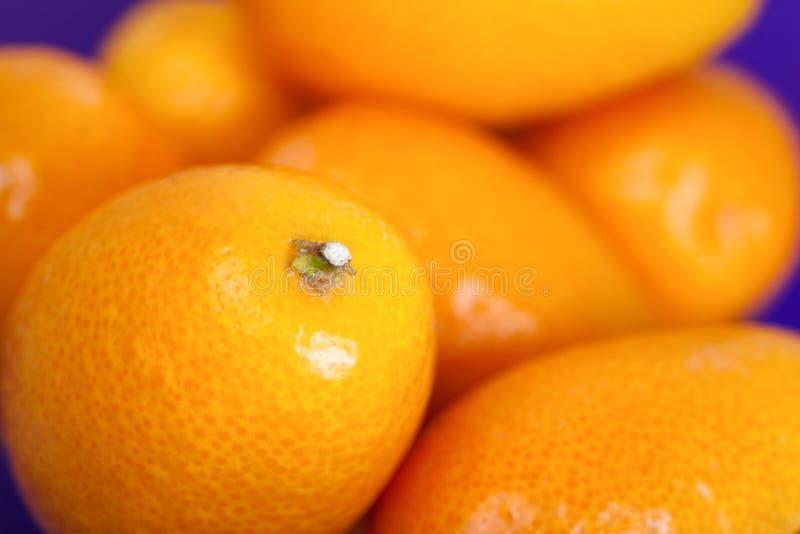 Frutas do Kumquat fotos de stock royalty free