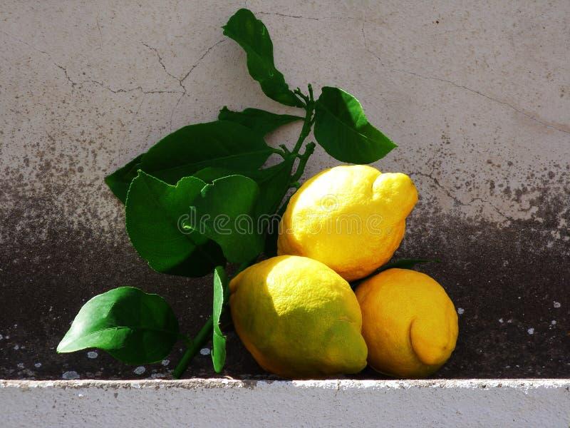 Frutas do limão fotos de stock