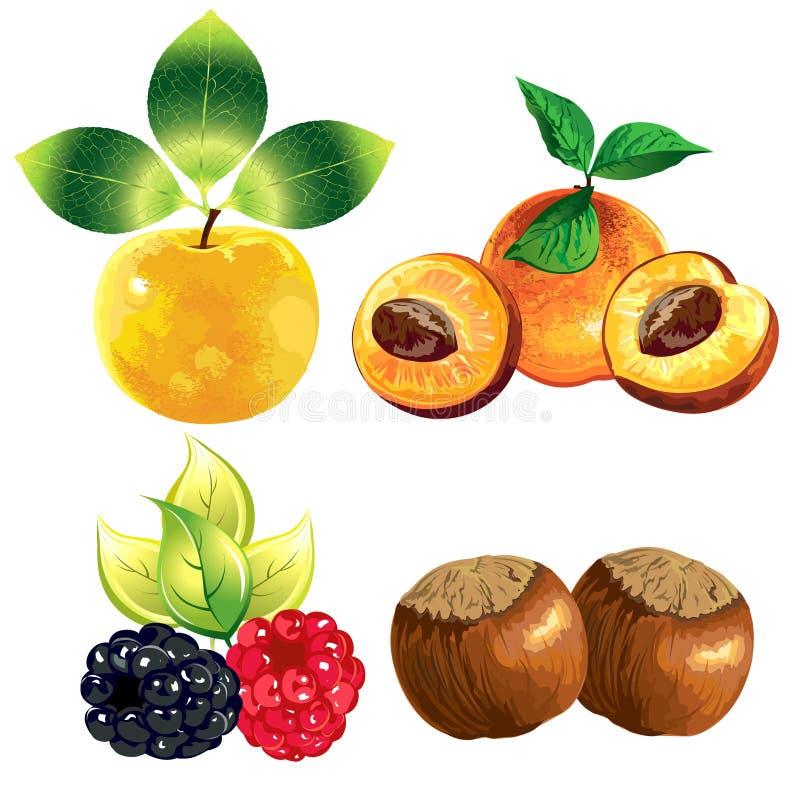 Frutas dos ícones ilustração do vetor