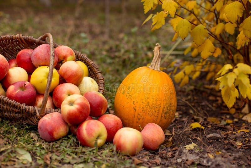Frutas e legumes no jardim fotografia de stock