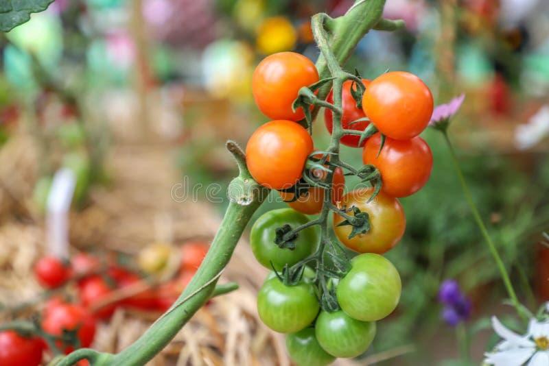 Frutas e legumes orgânicas frescas de produção local fotografia de stock royalty free