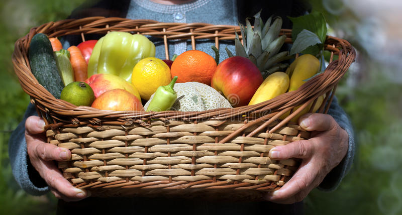 Frutas e legumes orgânicas - nas mãos de uma mulher adulta, a cesta está completa do alimento saudável fotografia de stock royalty free
