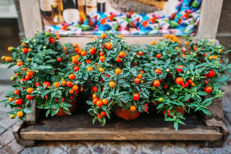 Frutas e legumes saudáveis frescas do alimento biológico no mercado imagem de stock