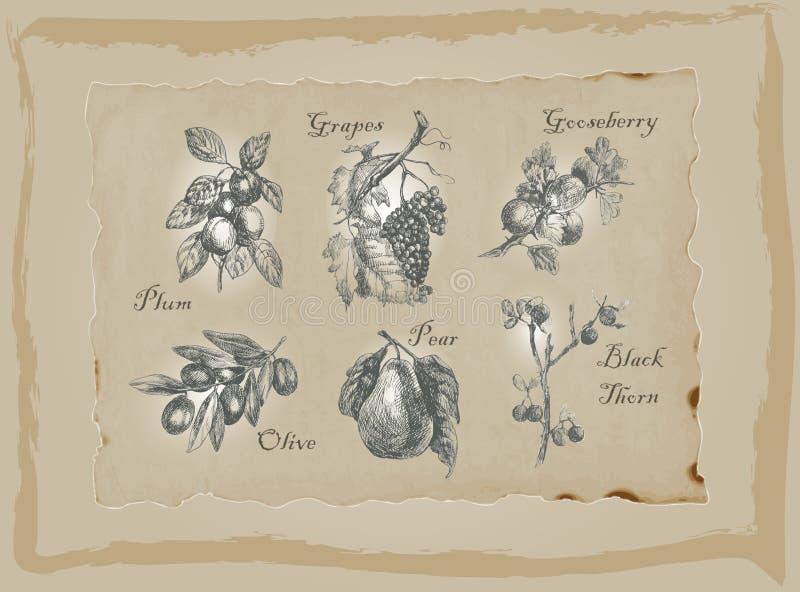 Frutas e legumes - um bloco tirado mão Desenho da carta branca ilustração do vetor