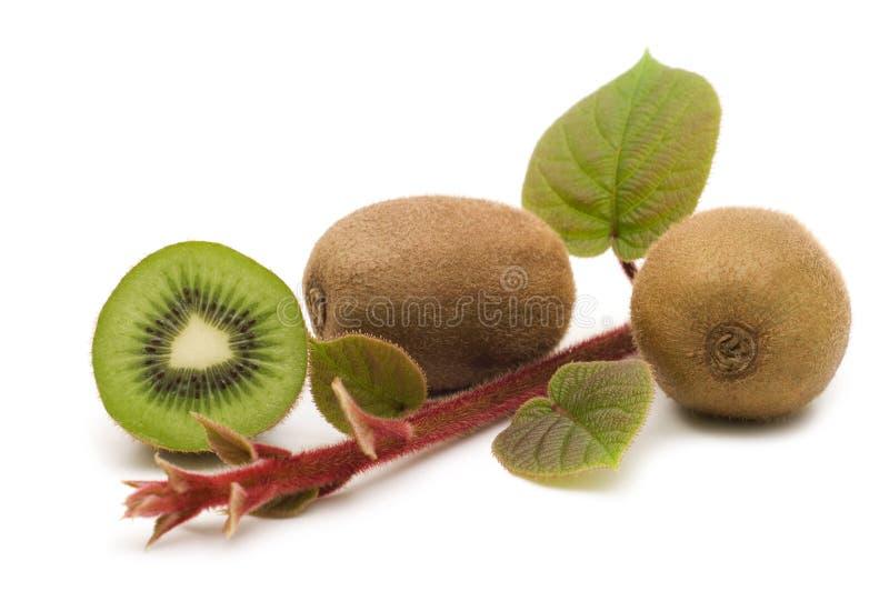 Frutas e plantas de quivi fotos de stock