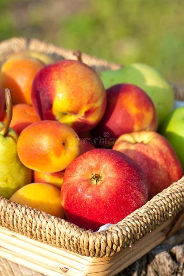Frutas en cesta imagen de archivo libre de regalías