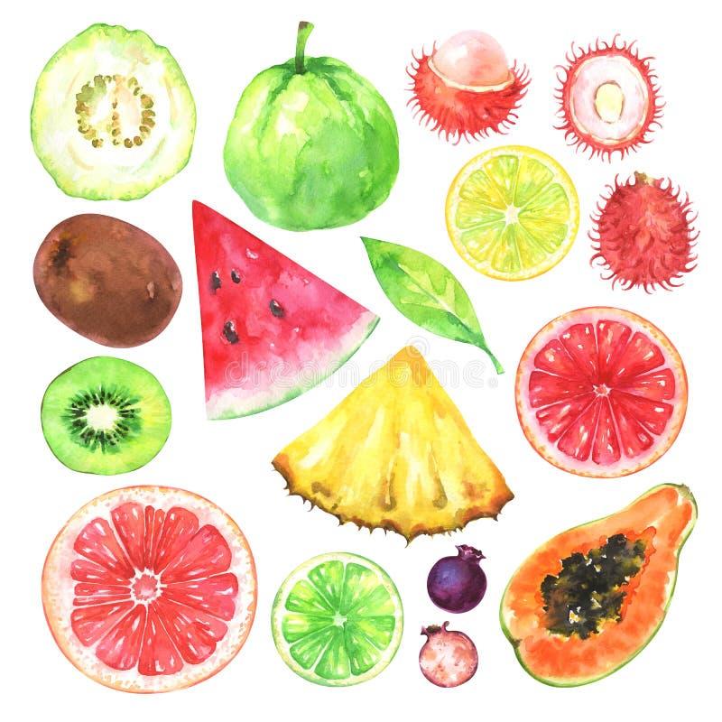 Frutas exóticas pintadas a mano de la acuarela fijadas stock de ilustración