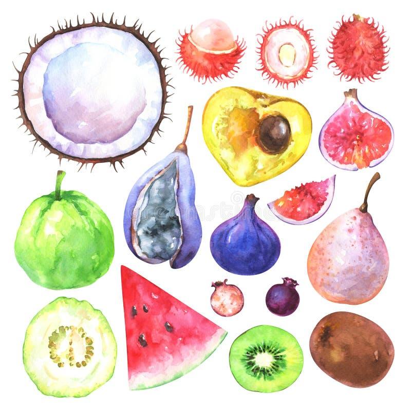 Frutas exóticas pintadas a mano fijadas libre illustration