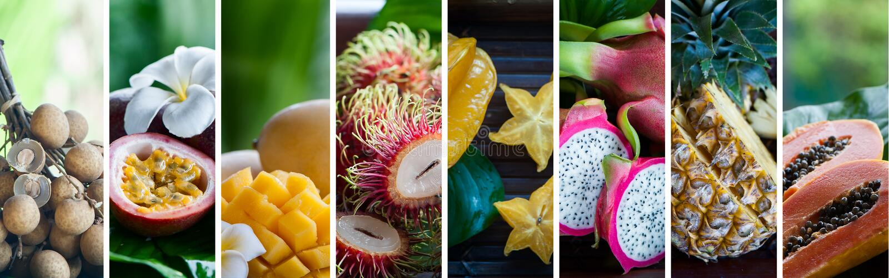 Frutas exóticas, tropicales Concepto sano del alimento Alimento biológico Collage de las frutas tropicales del color fotografía de archivo